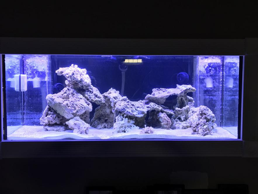 Mike's New Tank (My Wife is Pissed)-img_0073new.jpg