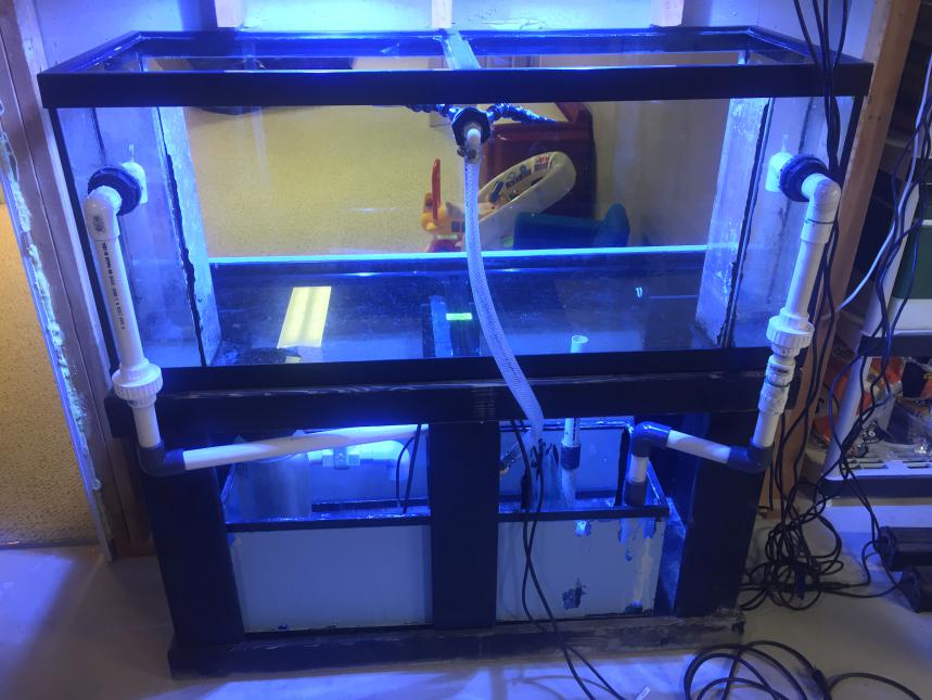 Mike's New Tank (My Wife is Pissed)-img_4624.jpg