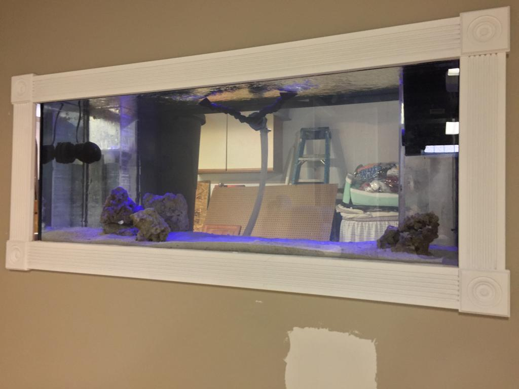 Mike's New Tank (My Wife is Pissed)-img_4717.jpg