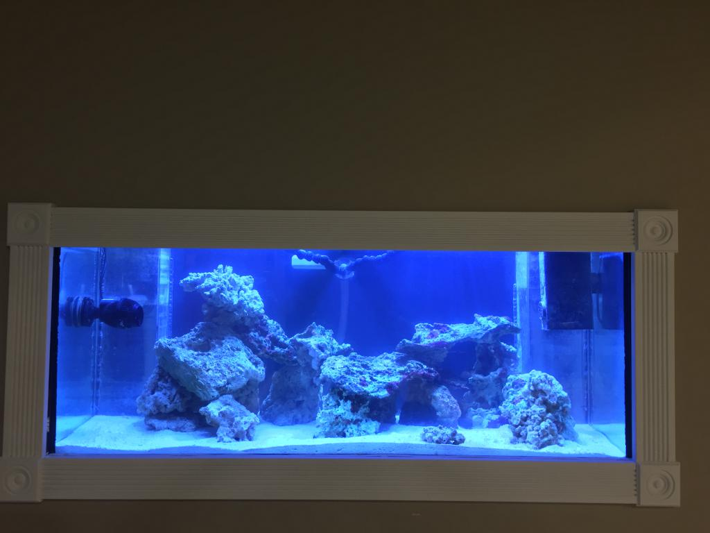 Mike's New Tank (My Wife is Pissed)-img_4774.jpg