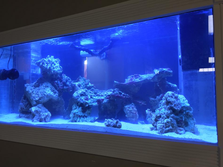 Mike's New Tank (My Wife is Pissed)-img_4775.jpg